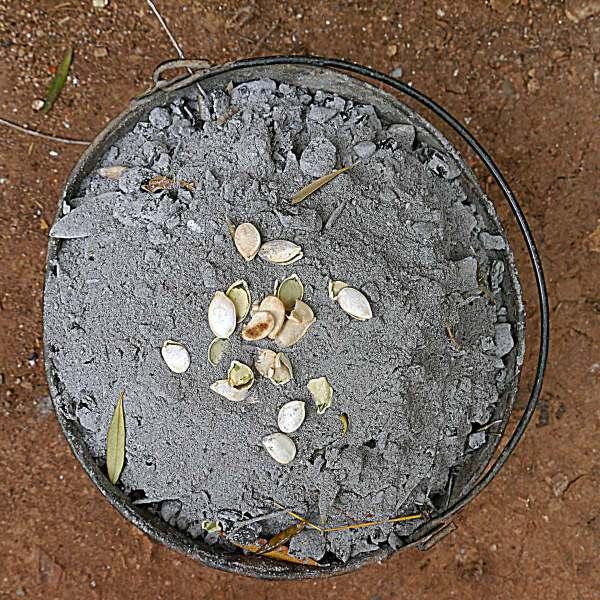 Cendres, pépites et feuilles d'olivier