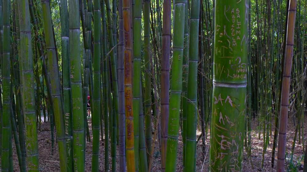 Graffiti sur bambou 3