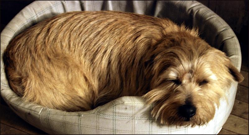 Poncho Sleeping