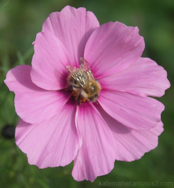 bee food