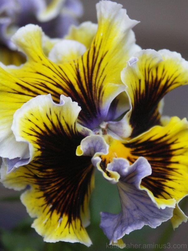 spring petals