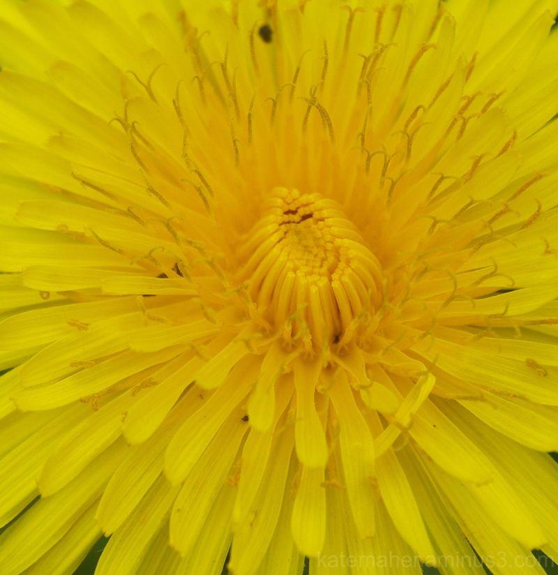 Yellow sun