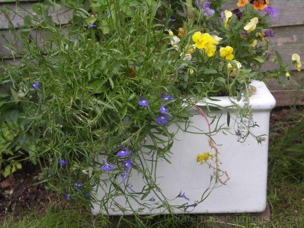 Planted tub!!