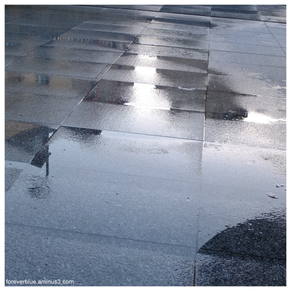... AFTER the RAIN ....
