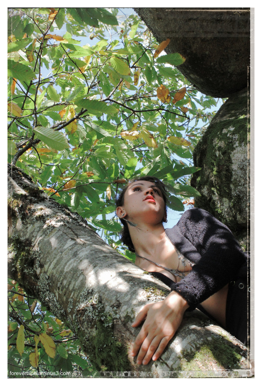 ... THE LADY DREAMING in the TREES ...