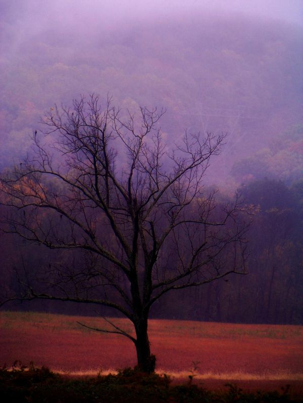 Mist or Myth
