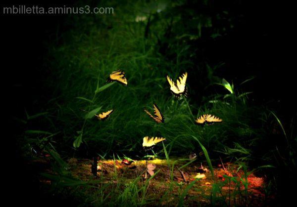 Butterflies Fluttering By