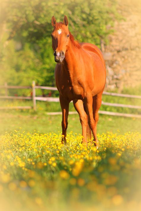 In the Buttercups