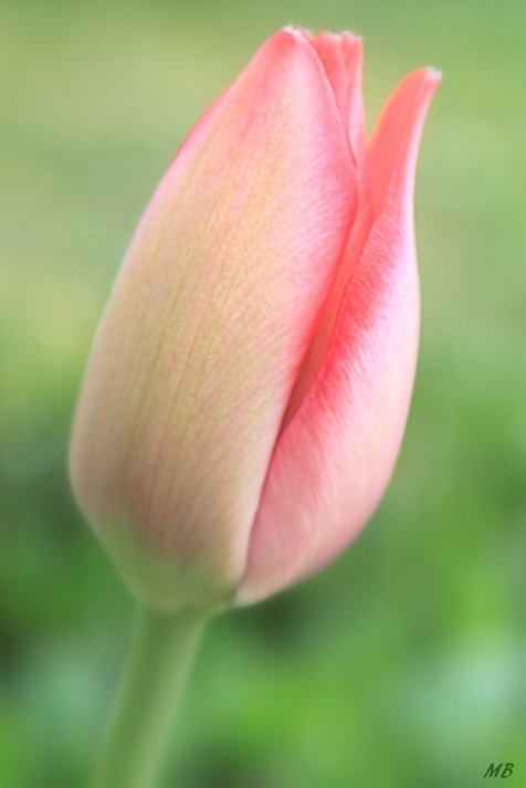 Let Spring Begin