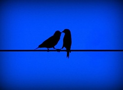 Evening Love Birds?