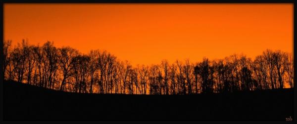 Tree Lined Sunset