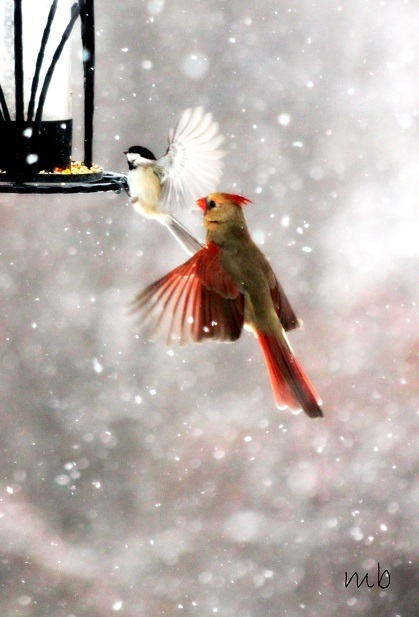 Winter Bird Series 1