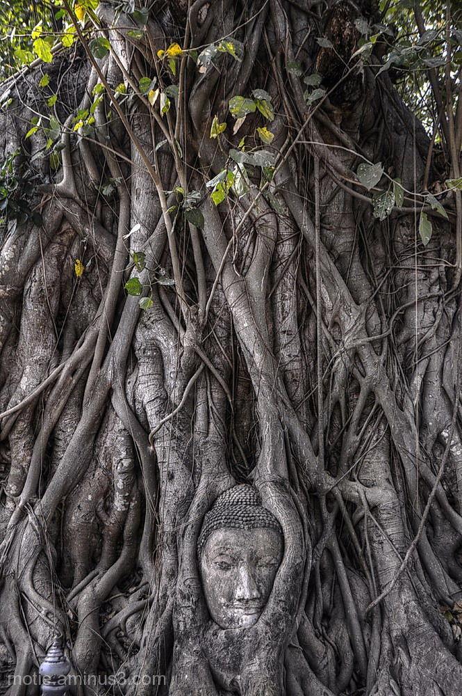 bouddha thailand