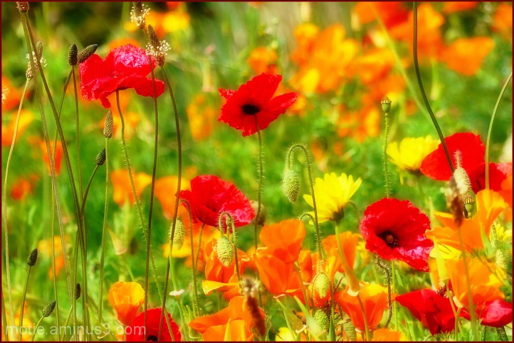 Summer desire....