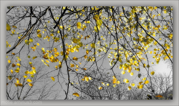 Pluie d'automne...../Rain of Automn.