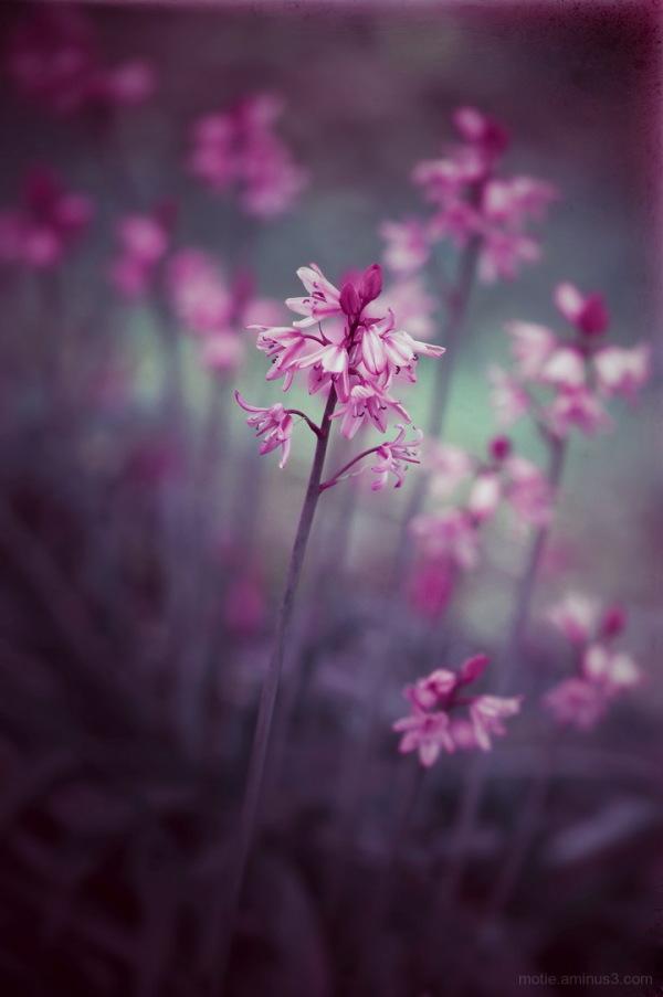 Spring isn't pink...