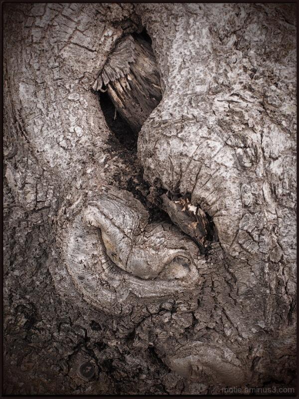 """Elephant Tree"""