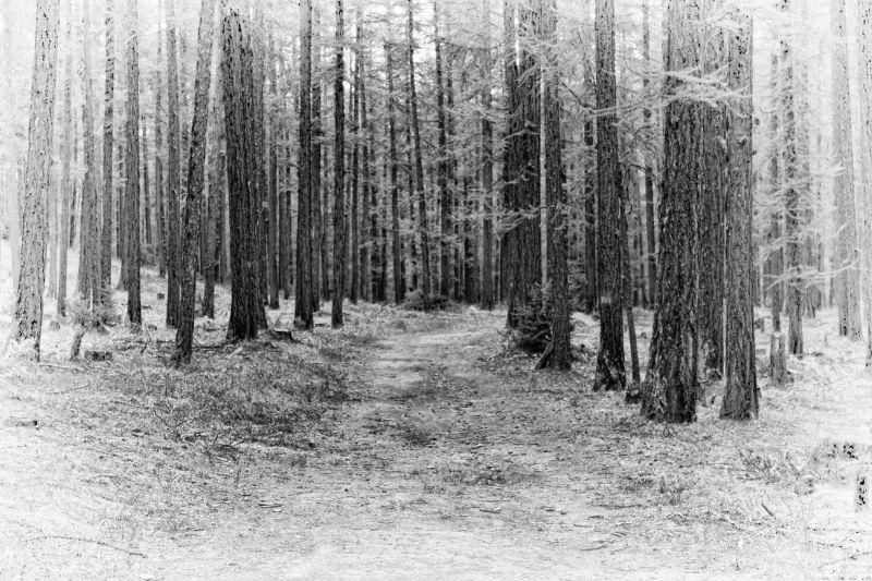 forêt mystère