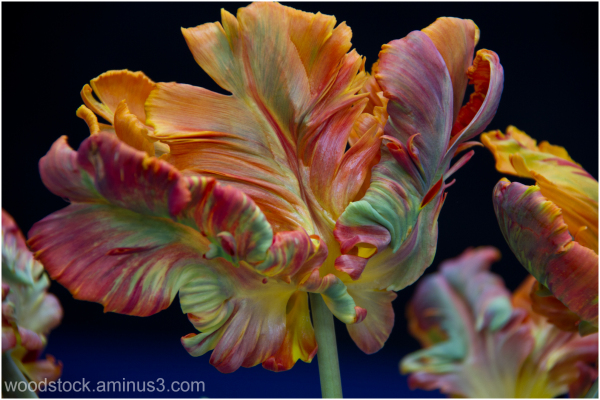 A Bloom 4 U