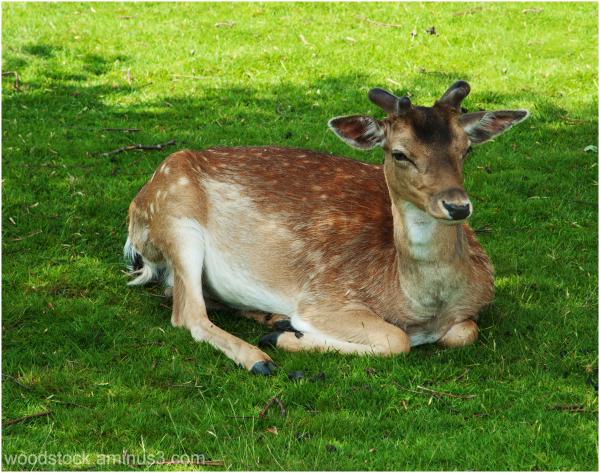 Bambi - well not quite