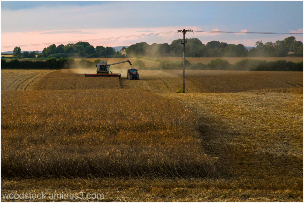 Harvesting Oil Seed Rape