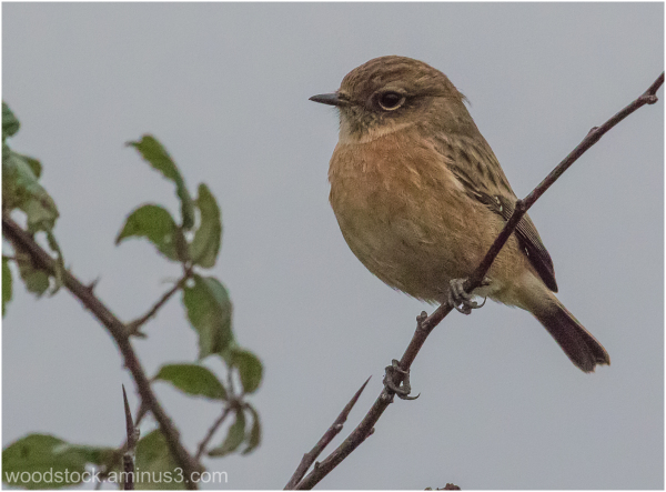 And ideas what bird this is please ?