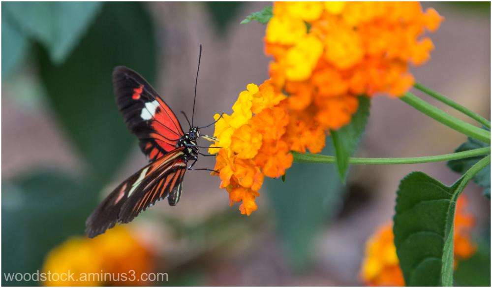 Butterfly House Berkeley Castle