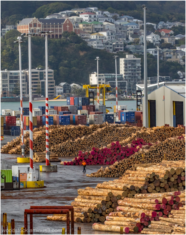 Log Jam - New Zealand