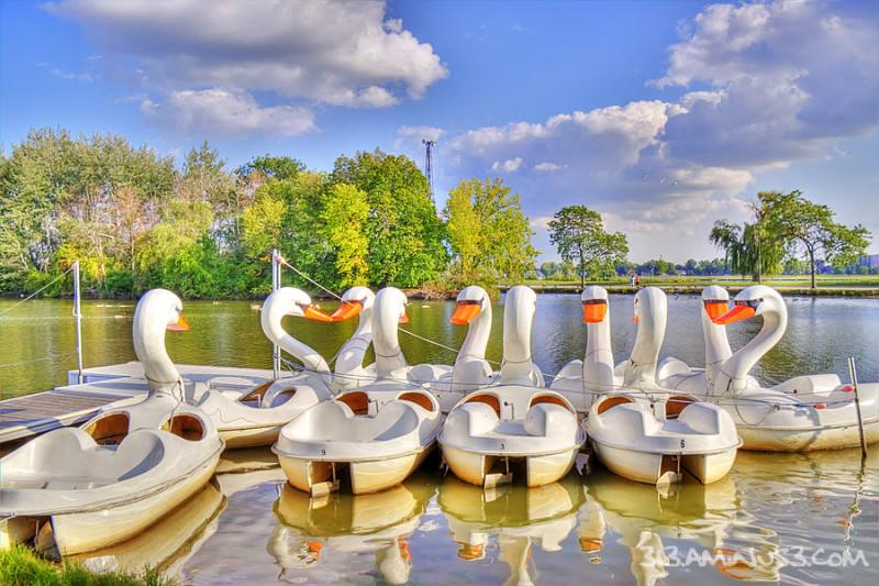 Summer Swan Song