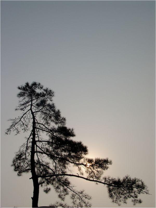 Soleil dans les branches