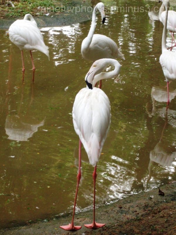 Flamingo~