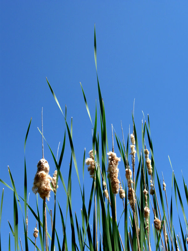 Grass in the swamps