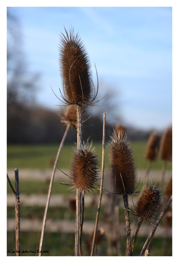 flower seed pods