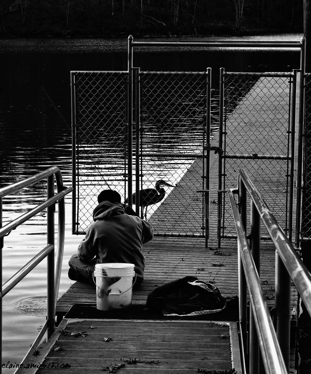 fisherman and heron