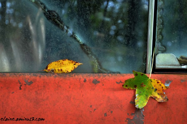 leaves on a car