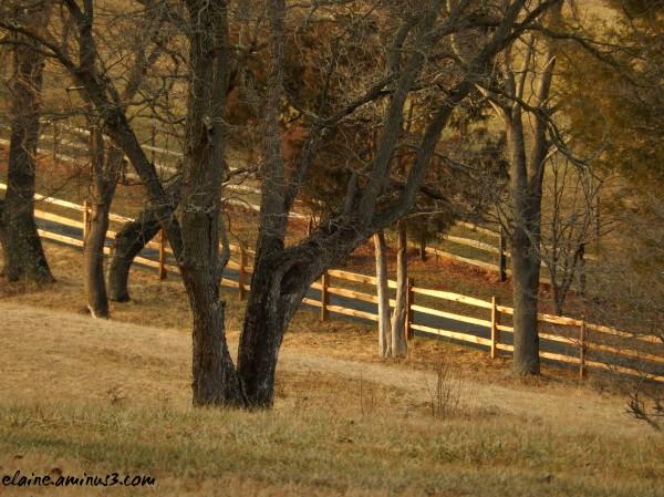 wooden fences