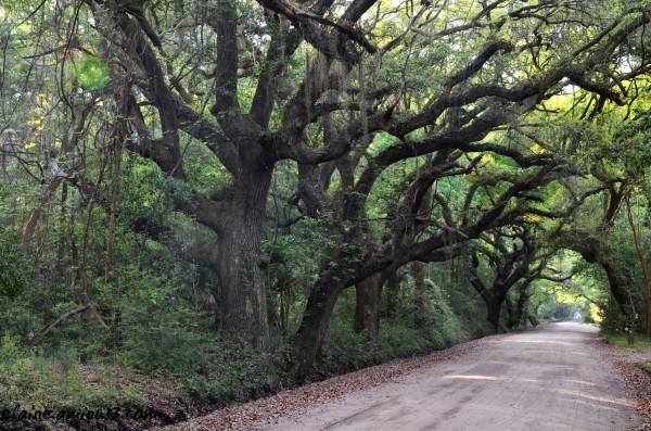 Edisto Island road