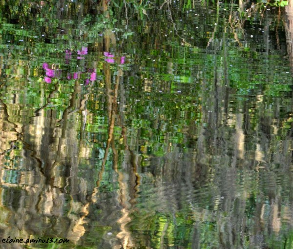 reflection in a pond