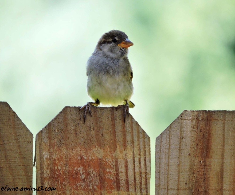 bird on a fence