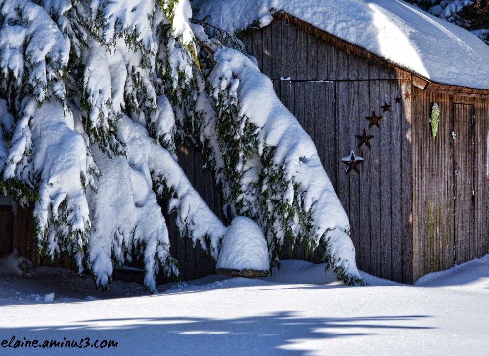 snow and shed