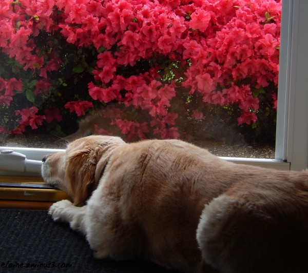 waiting at the door