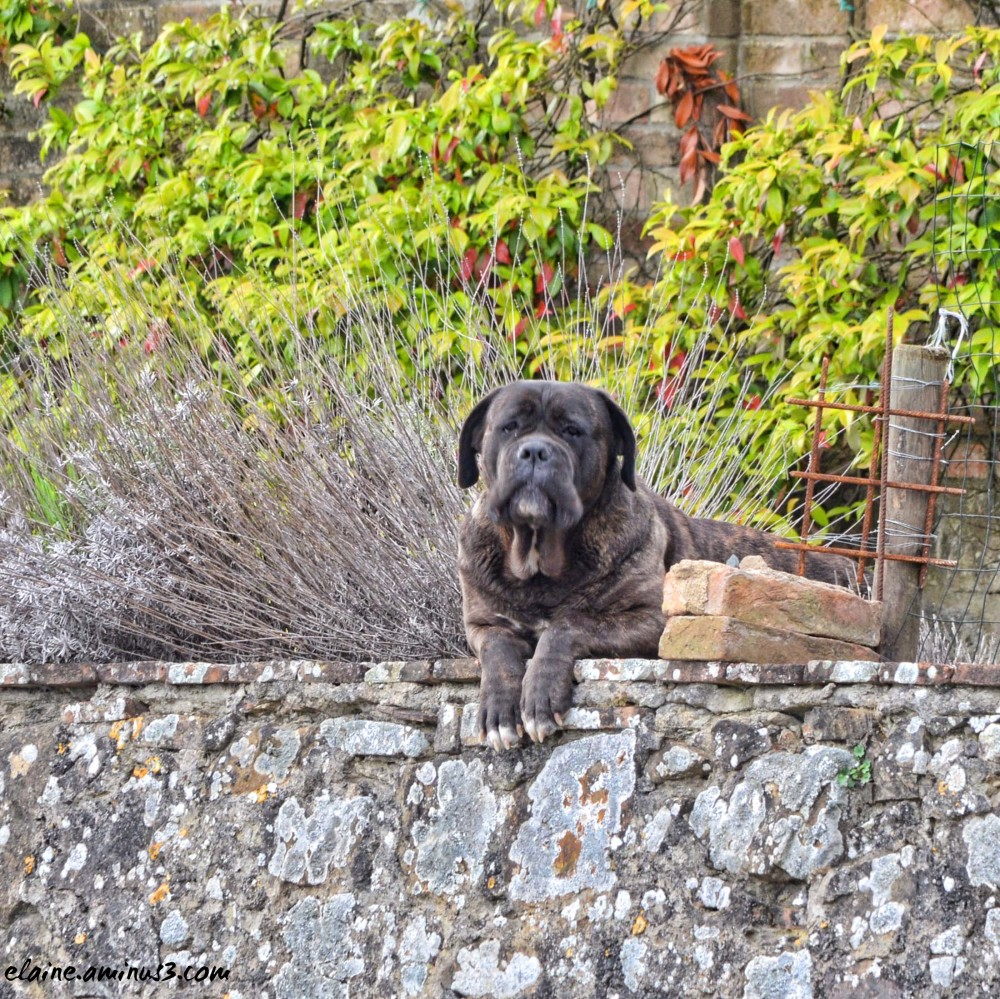 vineyard watchdog