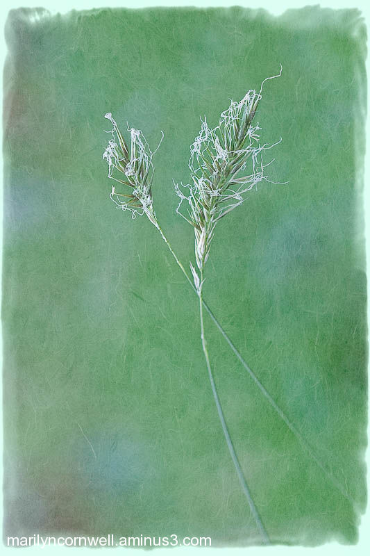 green, grasses, entwined, abstract, dreamy, soft