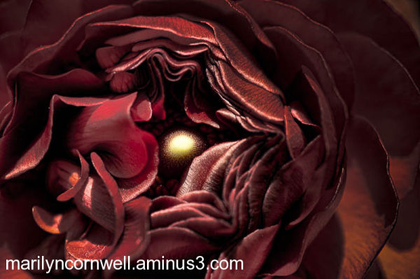 abstract ranunculus centre