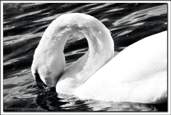 The white & the black