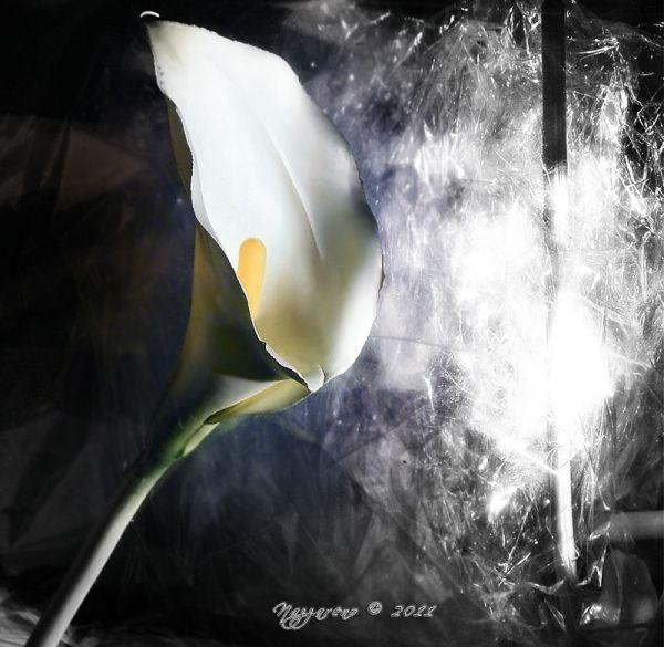 A malicious flower