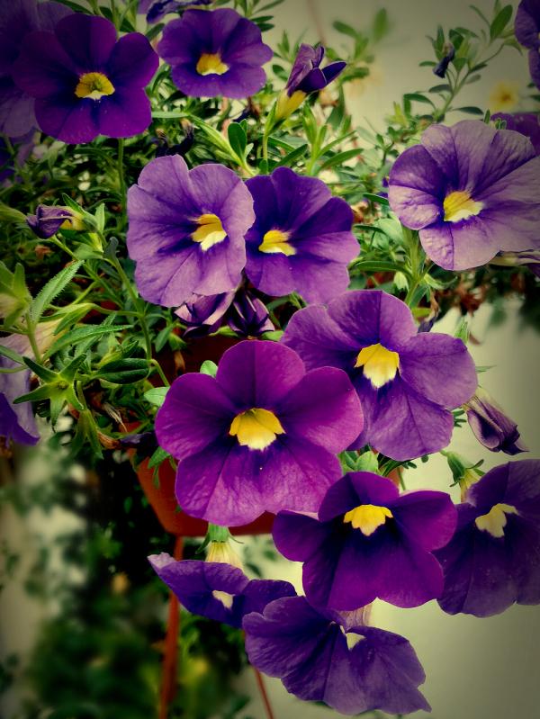 Petites fleurs d'été