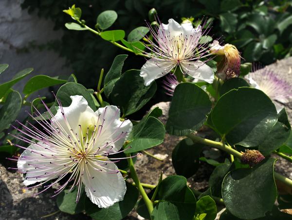 Petites fleurs 3