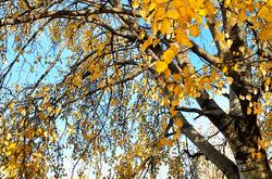Yellow winter 1