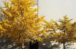 Yellow winter 2